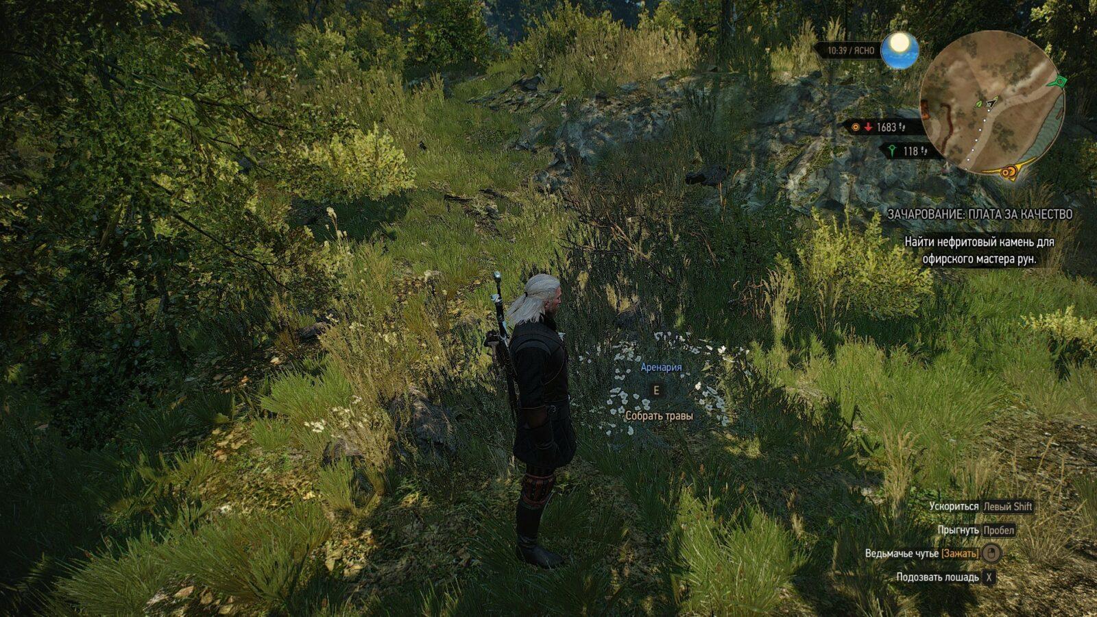 Где найти зубровую траву в Ведьмаке 3?